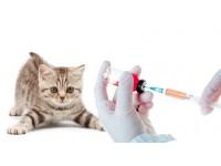 Вакцинация и дегельминтизация кошек. Профилактика от инфекционных заболеваний. Рекомендации и обзоры ветеринарных препаратов.