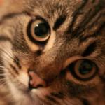 Кошка не птичка, в клетке не удержишь!
