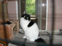 Фотогалерея гостиницы для кошек часть 8
