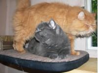 Постояльцы гостиницы для кошек - 2013 год