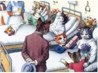 Вирусные заболевания кошек и собак. Часть 2-ая