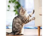 Воспитание кошек в домашних условиях. Рекомендации специалистов. Часть 1